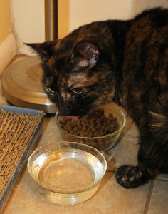Lucky, now named Chloe eats her food right away after being let out into her new home. Jillian Danielson/RiverScene