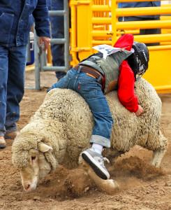Jack Mullen rides a sheep backwards during Mutton Bustin Saturday morning during Little Delbert Days. Jillian Danielson/RiverScene