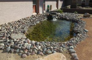 A pond sits in the habitat at Lake Havasu High School. Jillian Danielson/RiverScene