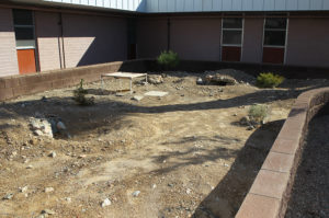 Tortoises have a portion of the habitat at Lake Havasu High School. Jillian Danielson/RiverScene