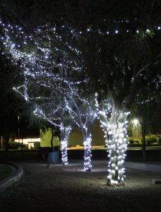 Trees are lit for the Christmas season every December. Jillian Danielson/RiverScene