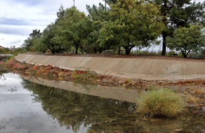 Trees are reflected in water in a wash Thursday morning at Rotary Park. Jillian Danielson/RiverScene