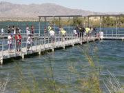 fish lake havasu