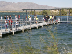 fish lake havasu