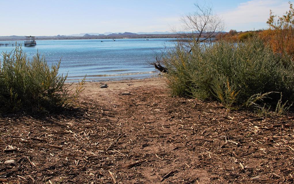 Mesquite Bay
