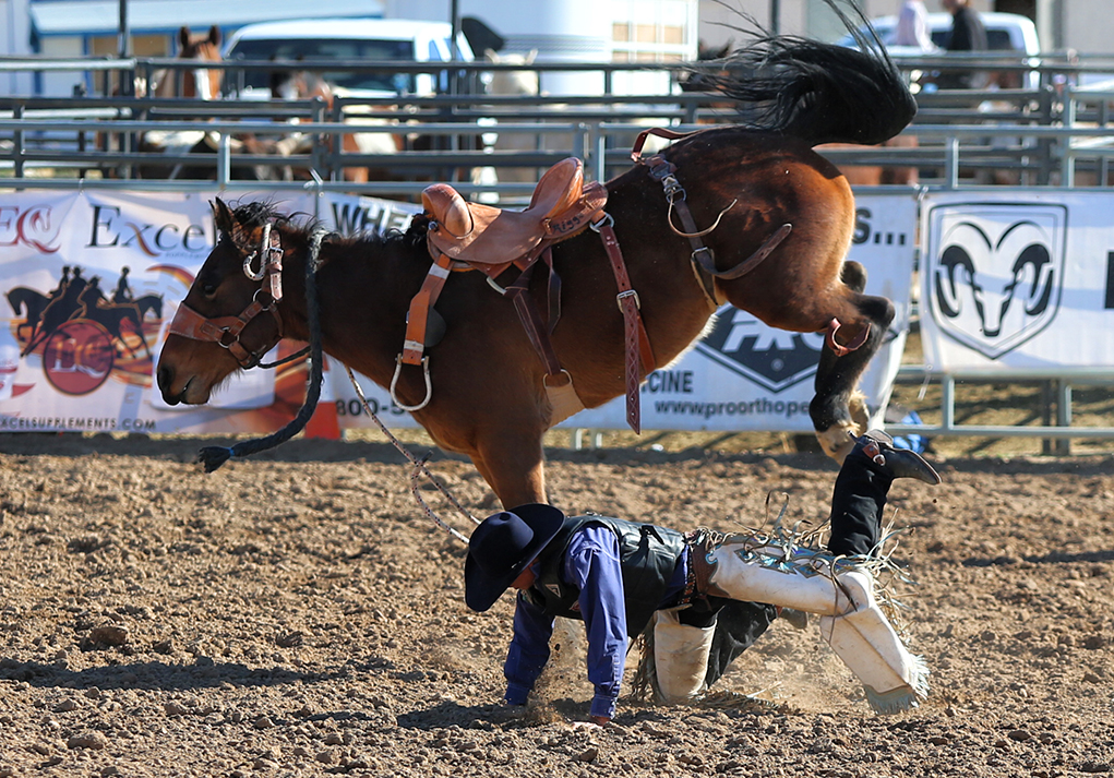 2020 Lake Havasu Delbert Days Rodeo