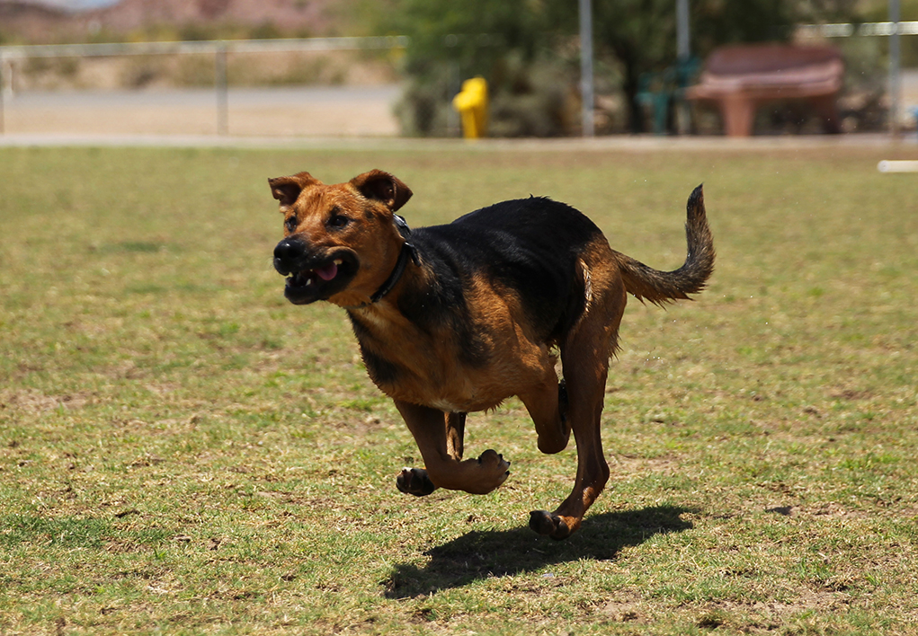 Temporary Dog Park Closures for Non-Routine Maintenance and Turf Recovery