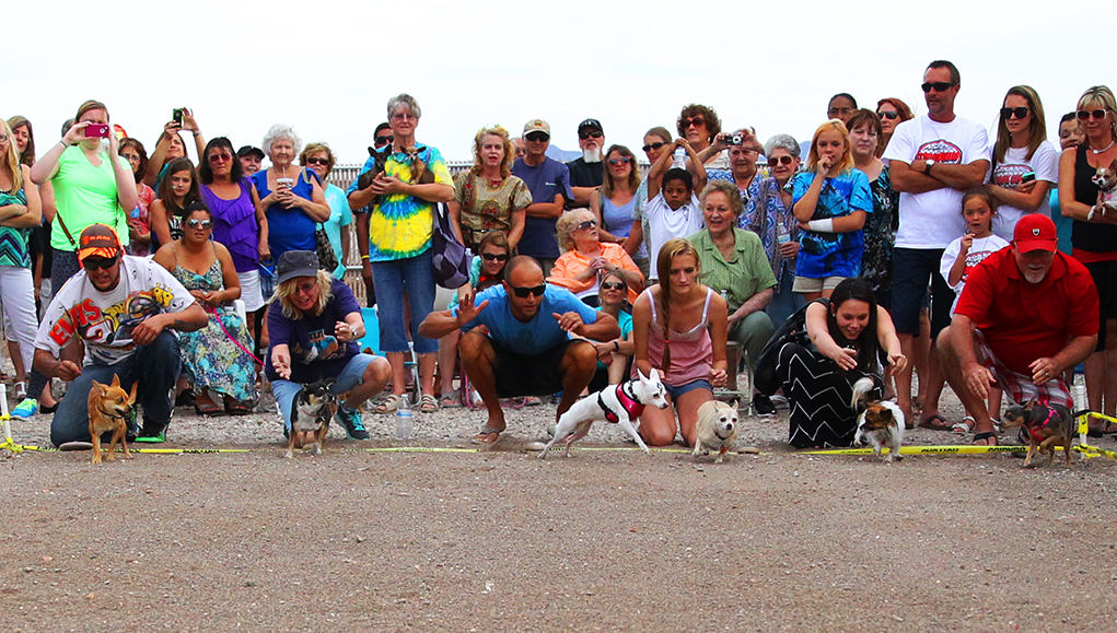 The Great Chihuahua Races Set For May 5