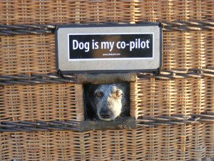 This is Bandit, the pilot's dog that he takes on balloon rides. Bandit went on the balloon ride through Lake Havasu. He is a very well-behaved dog and is an amazing co-pilot. The girls loved getting to be with him. Courtesy Lyndsey Brueckner and Sadelle Finney