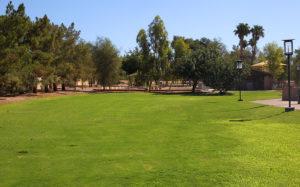 Jack Hardie Park grass area. Jillian Danielson/RiverScene