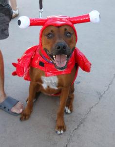 """Mr. Banks"" is dressed as a lobster for Saturday's Duck Derby. Jillian Danielson/RiverScene"