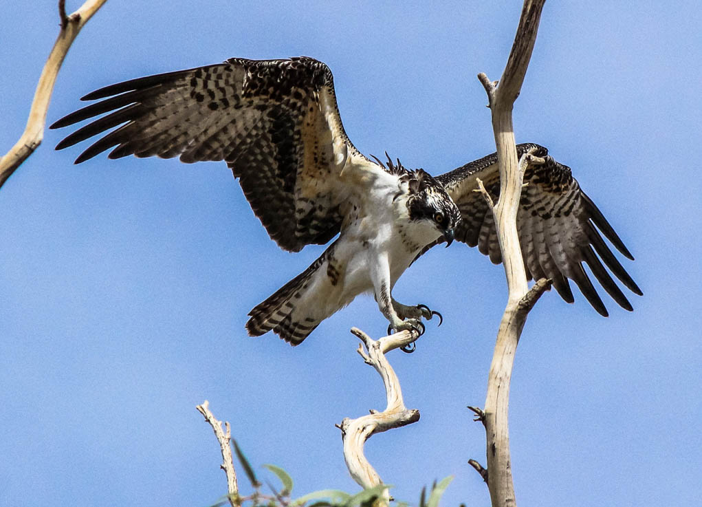 Combine Hobby With Service – Photograph And Count Feathered Friends
