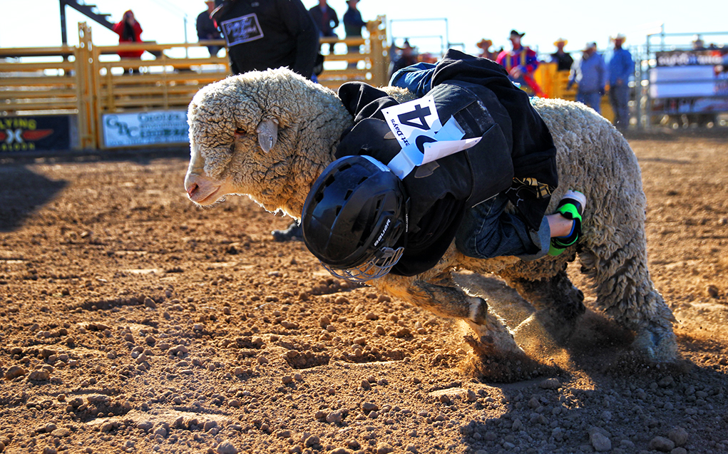 Youth Mutton Bustin' And Calf Ridin' At Delbert Days Rodeo