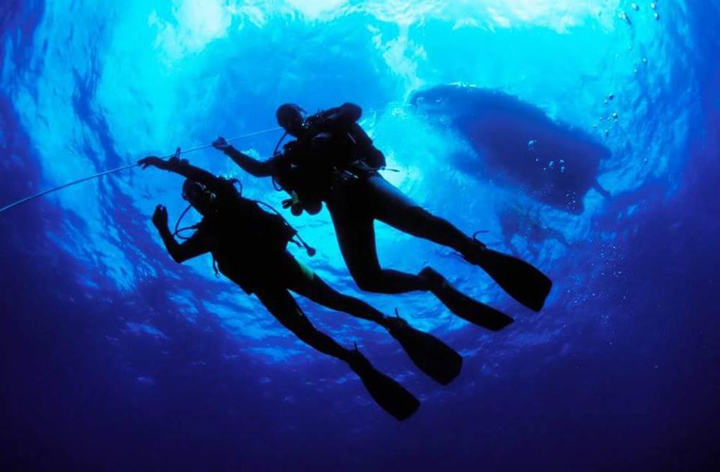 Dive Like Mike Training Grant Application Deadline Extended