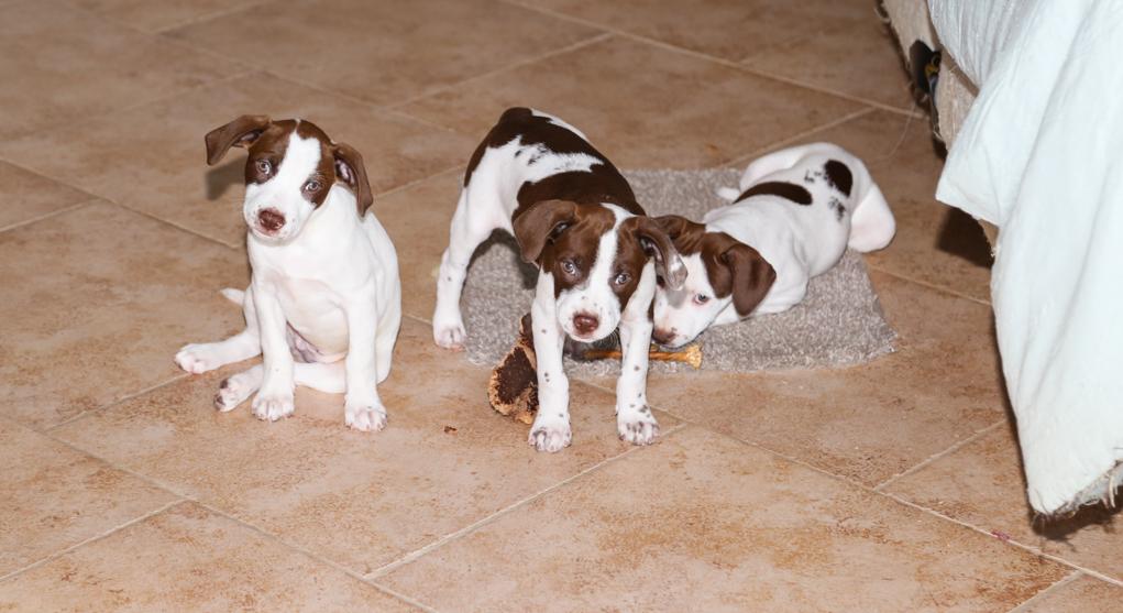 Pets Up For Adoption Saturday At Petsmart