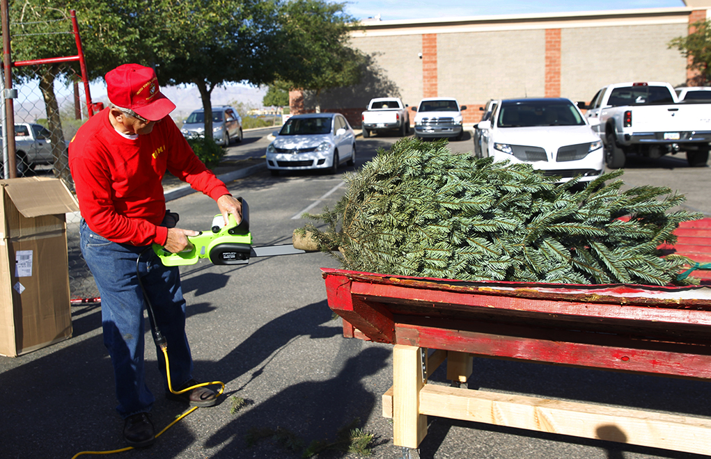 Fresh Christmas Trees Ready For The Holidays