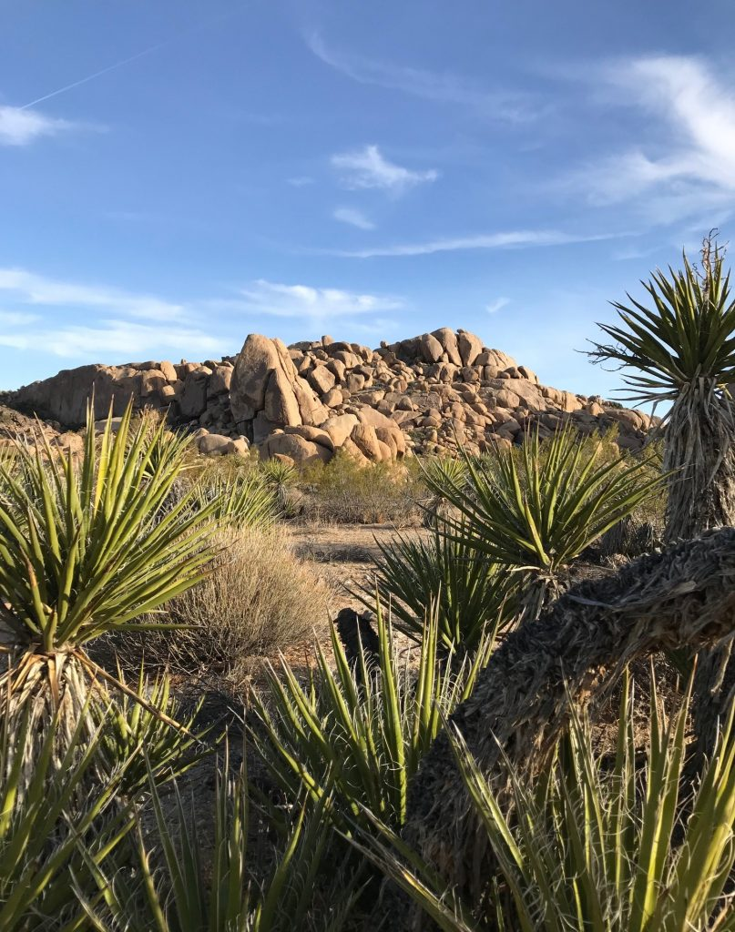 joshua tree national park asian dating website We love these national parks for their incomparable landscapes and environmental and applications is available on the park website 4 joshua tree national park.