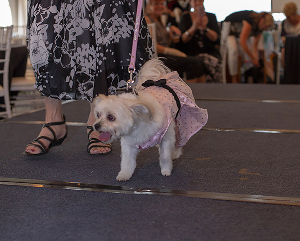 Pooches Join Owners On The Runway At Paws For Fashion