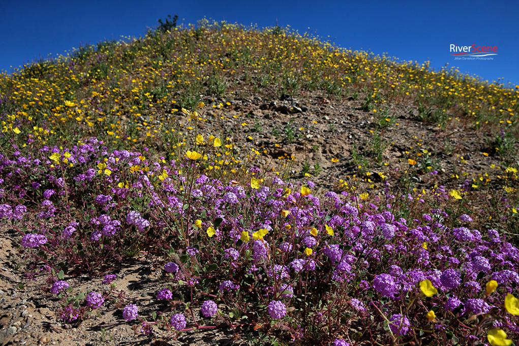 A Festival Of Desert Beauty