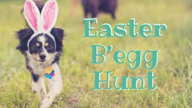 That Dane Bar Egg Hunt and WAHS Adoption Event