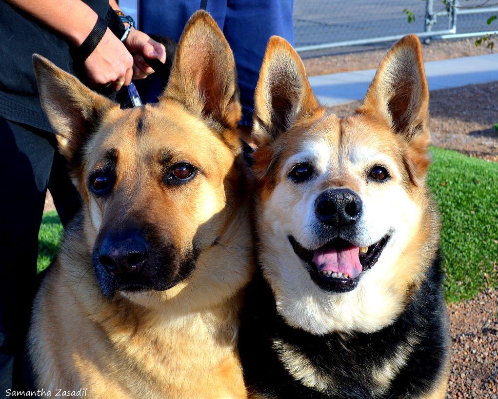 Find Puppy Love At WAHS