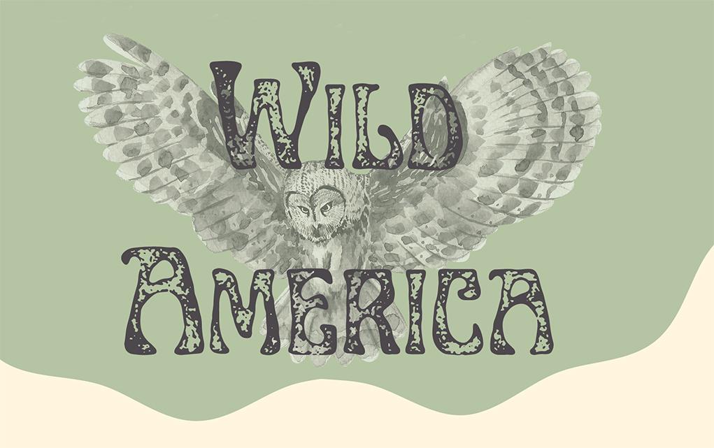 Wild America Exhibition Launches At Lake Havasu Museum of History
